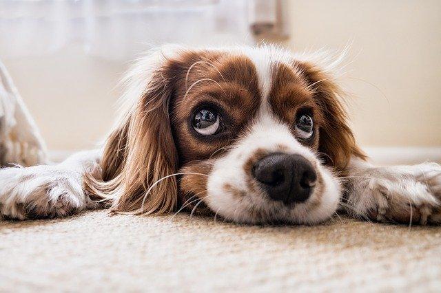 Jak se zbavit zvířecích chlupů v domácnosti?